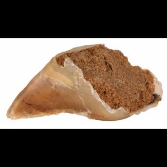 Trixie Kauhufe | 25 Stück à 115g | gefüllt mit Fleischpastete