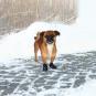 Trixie Pfotenschutz Walker Active | 2 Stück | schwarz, Größe: XS