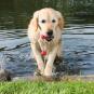 Trixie Dog Activity Mot-Fun, schwimmt 9 cm | 22 cm